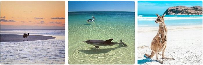 playas australia delfin emu canguro