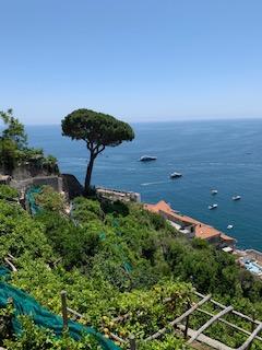 limoneros amalfi montaña cultivos cocina mediterranea